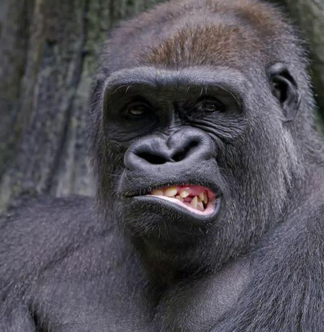 20 животных, которые покорят кого угодно своей харизмой