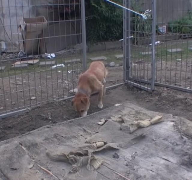 Хромой пес ждал хозяина у сгоревшего дома, а тот все никак не мог прийти к питомцу